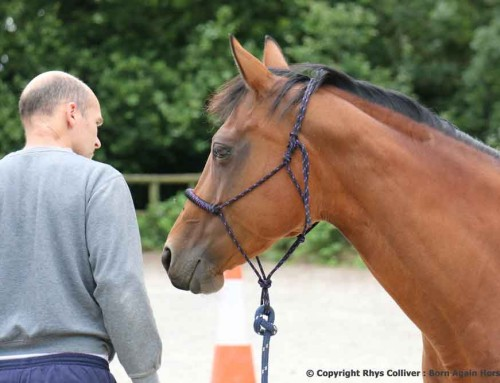 WHAT PROGRAM DO WE FOLLOW TO GET EXTRAORDINARY RESULTS WITH OUR HORSES ?