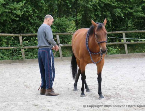 USING PRESSURE WITH YOUR HORSE POSITIVELY